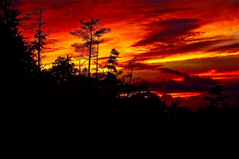Art Is Everywhere Wonder of Nature : Sunset - A Dramatic and Awesome Sunset with the Western Sky Glowed with Crimson. I know about a great French novel 'Le Rouge et le Nior'. This sunset looks as if it were a painting. Might I use 'Le Rouge et le Noir' for another title of this photo? Beauty In Nature Nature Sky Cloud - Sky Dramatic Sky Sunset Crimson Color Tree Silhouette Scenics Tranquil Scene Outdoors No People . Taken on Oct. 3, 2016 ( Submitted on April 29, 2017 ) in Kure, Japan.