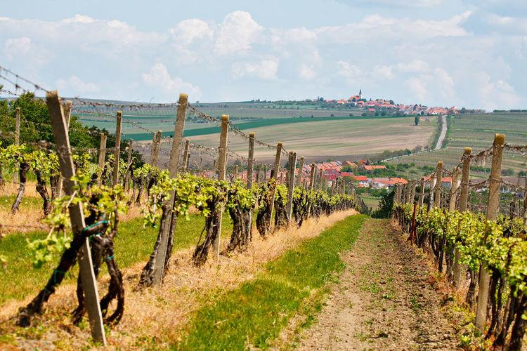 Scenic rural scene in czech republic