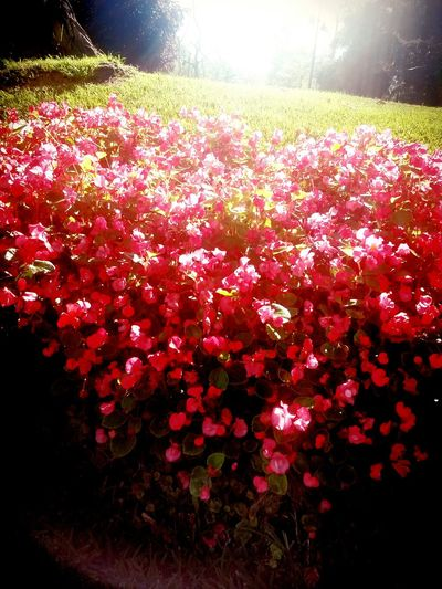 Phography Flower Photography Gezipark