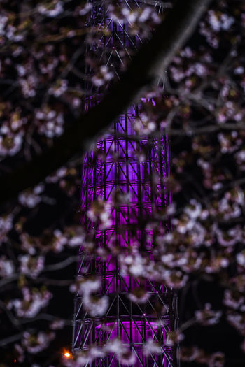 Low angle view of purple flowering plants against trees