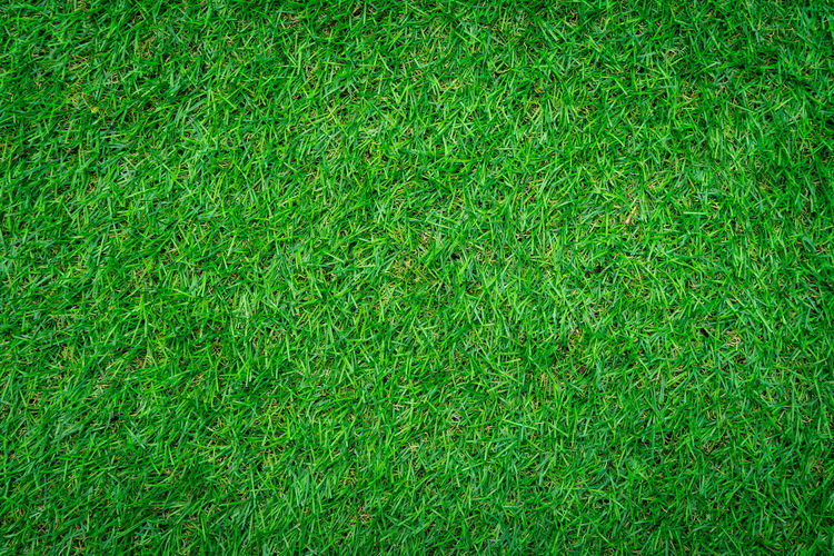Full frame shot of grass. Green Color Full Frame Grass Backgrounds Plant Nature Growth Field Land Day High Angle View No People Lawn Beauty In Nature Lush Foliage Outdoors Foliage Close-up Playing Field Freshness Turf Grass Backgouun