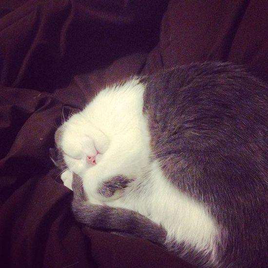 Christmas Eve festivities. ChristmasEVe Christmaseve2015 Kitten Kitty Cat Sleepy Sleeping Sleep Bed Bedtime Asleep Sleepybaby Sleepykitten Sleepykitty  Cute Cutie Awe Cutiepie Instacutie Kittensofinstagram Instakitten