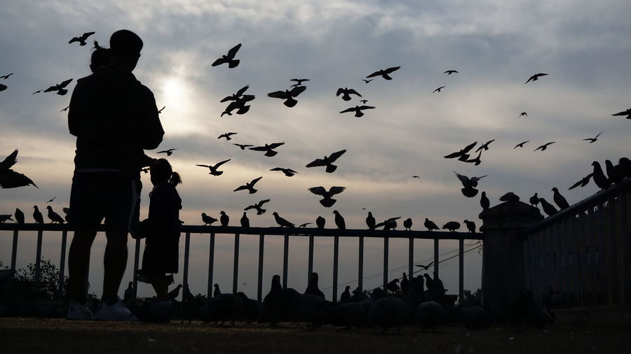 A story of a Family and Freedom Silhouette Bird Sky Flock Of Birds Large Group Of Animals Cloud - Sky Outdoors Standing Flying People Politics And Government One Man Only One Person Vulture Day Adult Animal Themes Only Men Adults Only Nwin Photography Sony A6000 Storytellingphotography Eyeem Silhouette Silhoutte Photography Candid Photography