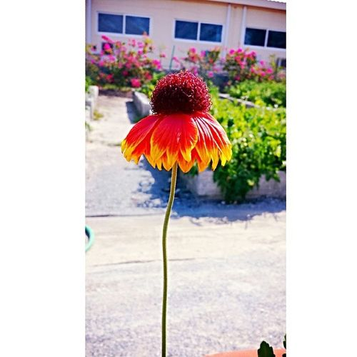 Colorful New_editing Flower Garden green_house