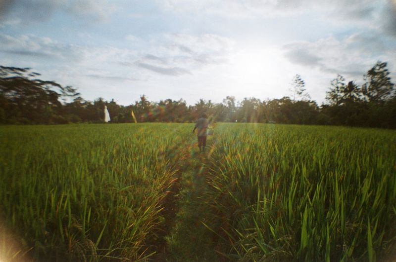 ubud is a mood -- kodak 200 35mm Film Analogue Photography Back Light Back Lit Bali Bali, Indonesia Dramatic Sky Farmer Film Photography Filmisnotdead Grass Grassy Field Greenery INDONESIA Indonesia_photography Lens Flare One Person Rice Field Rice Paddy Rural Scene The Great Outdoors - 2017 EyeEm Awards