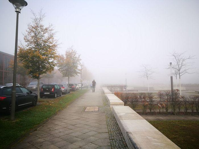 Car Street Fog Outdoors Tree Day City University Campus Humboldt Universität