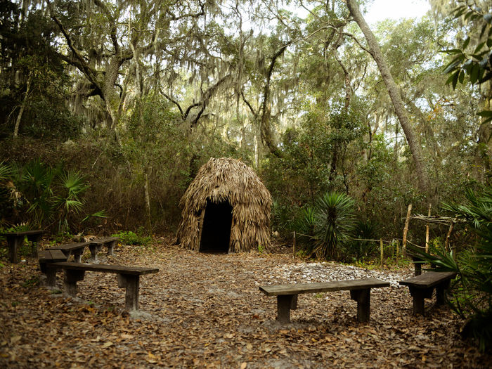 Tree Plant Land Nature Forest Seat Day Bench No People Outdoors Park Beauty In Nature Environment Indian Native American Indian