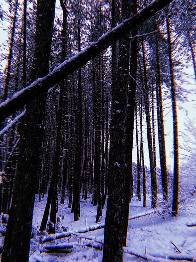Winter Snow Tree Nature Cold Temperature Forest Tree Trunk Tranquility Outdoors Day Sky Scenics Tranquil Scene Beauty In Nature No People Landscape
