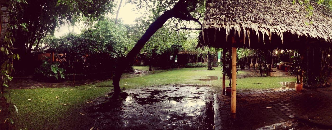 RainyGarden Rainy
