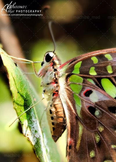 Photography Butterfly Canon Eos 1000d Insect