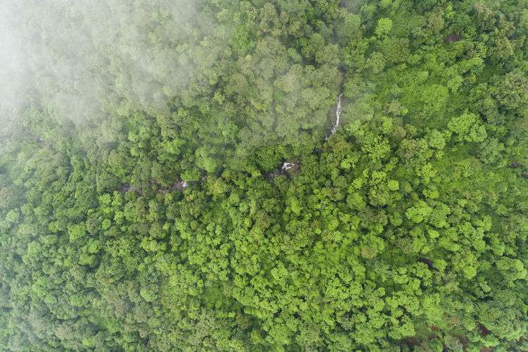 Aerial top view green forest for background Green Color Plant Growth Day Nature No People High Angle View Beauty In Nature Tree Water Outdoors Full Frame Leaf Plant Part Animal Tranquility Animal Themes Animal Wildlife Land