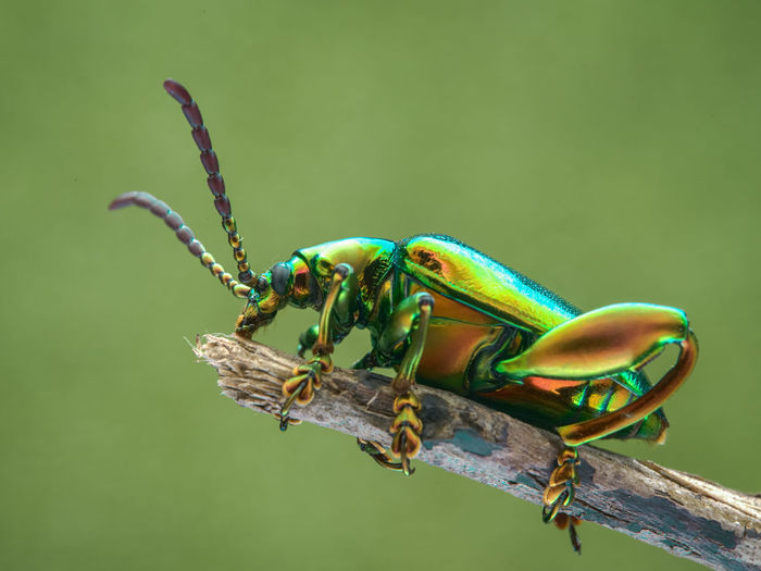 Macro shot of shiny beetle
