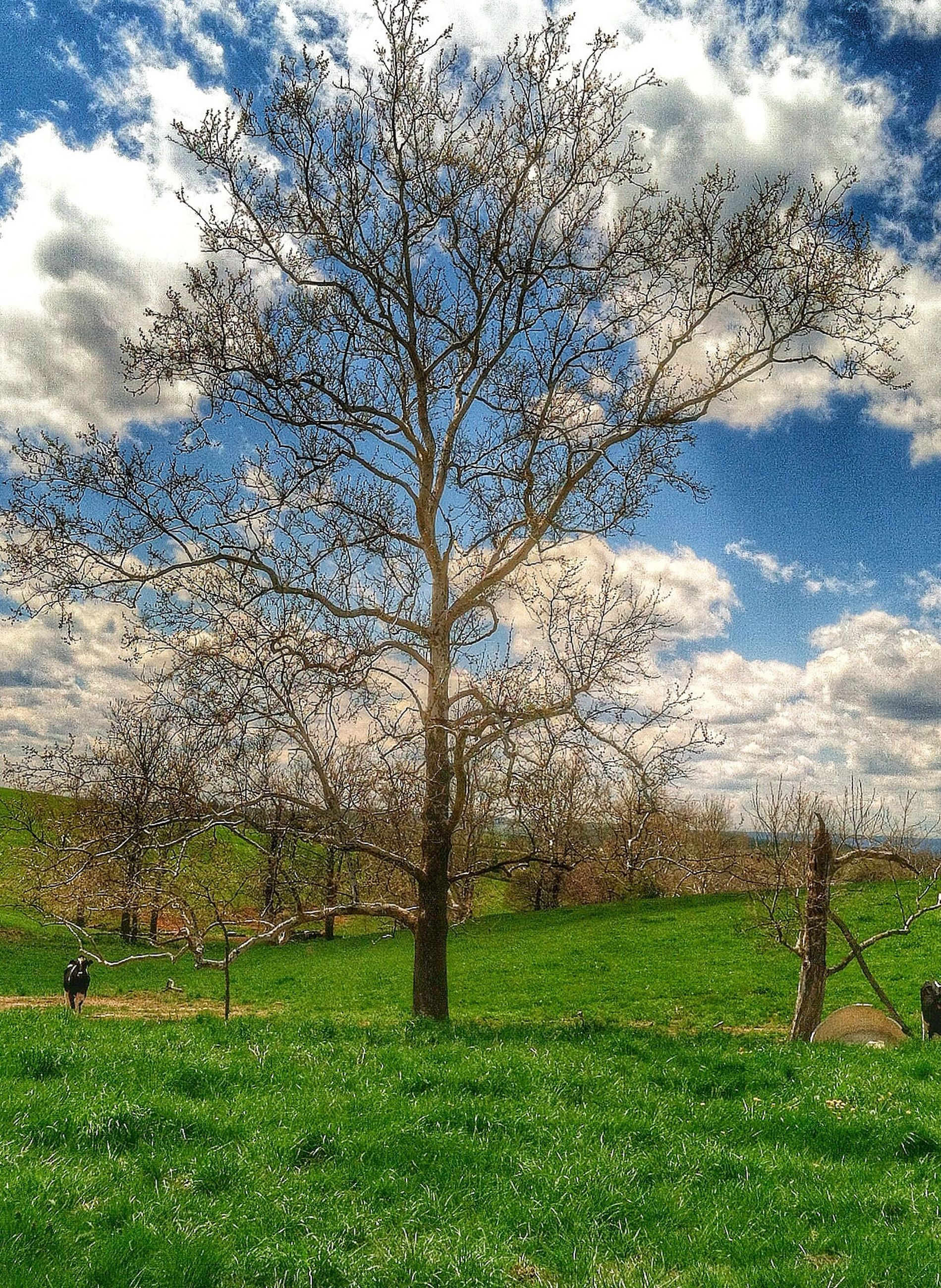 grass, tree, tranquility, water, sky, nature, beauty in nature, tranquil scene, field, green color, growth, scenics, cloud - sky, grassy, day, landscape, branch, outdoors, idyllic, weather