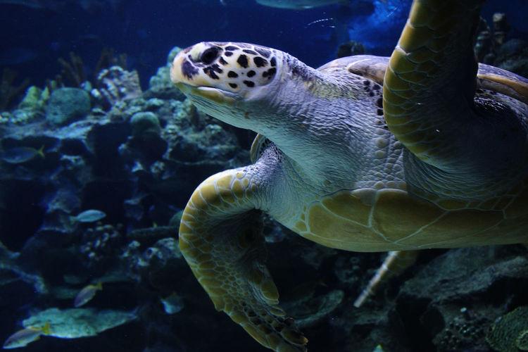 Location: Aquaria KLCC Underwater UnderSea Sea Sea Life Swimming Sea Turtle Aquaria Klcc EyeEmNewHere