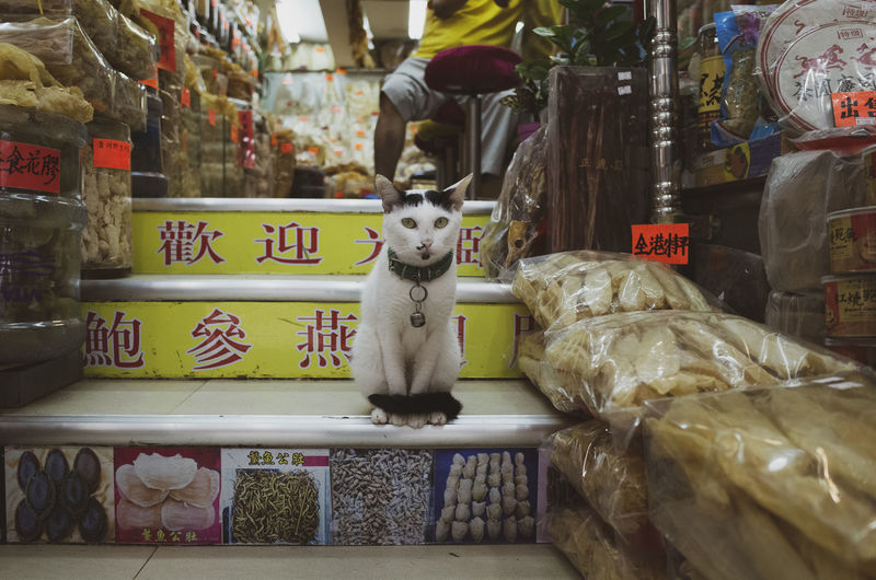 Mammal Animal Themes Animal Pets One Animal Domestic Animals Domestic Vertebrate Text For Sale Retail  Market No People Communication Store Script Retail Display Shopping Sitting Market Stall