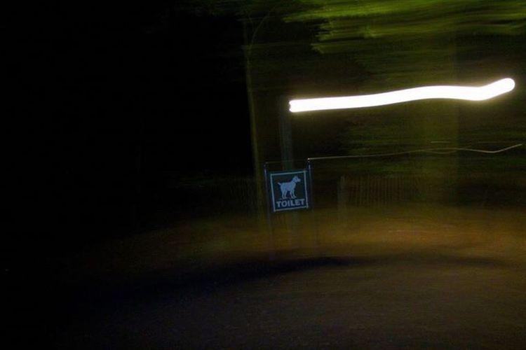 Number Communication Text Illuminated No People Night Outdoors Dog Sign Dog