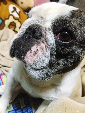 Http://youtu.be/NGFToiLtXro Can't Take My Eyes Off You - Frankie Valli And The 4 Seasons Taking Photos 😚 Ilovemydog