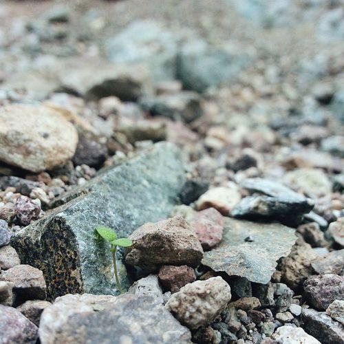 Desert micro greens. Deathvalleynationalpark Deathvalley Naturalbridgecanyon California roadtrip
