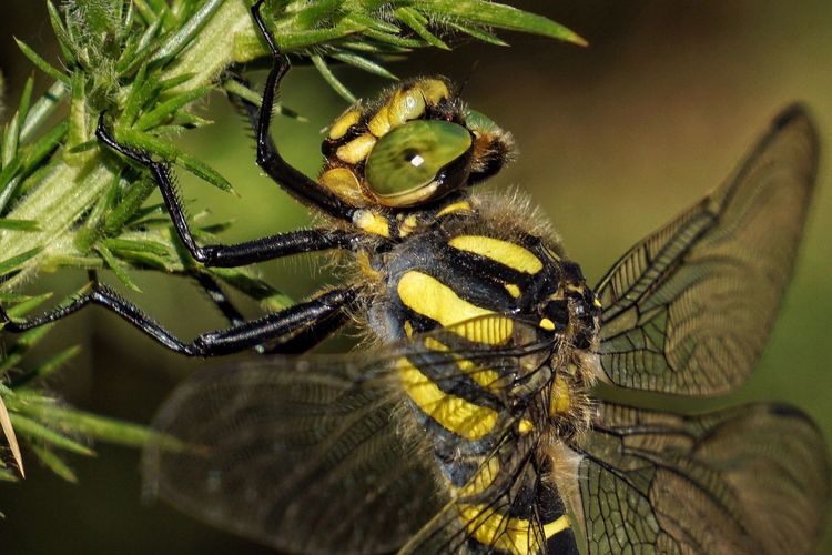 Animal Themes Insect Animals In The Wild Nature Plant One Animal Close-up No People Animal Wildlife Day Outdoors Beauty In Nature Macro Dragonfly Color Bokeh Beauty In Nature Beautiful