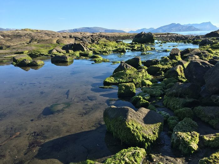Moss Growing On Rocks At Shore Against Clear Sky