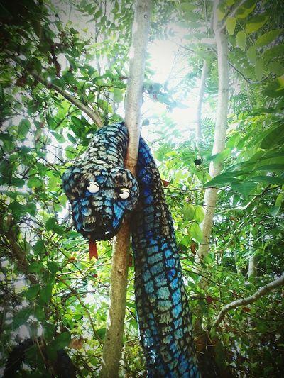 Mutonia Snake Trees Eyesofsnake Mutoid Hello World Artistic Expression Artinnature