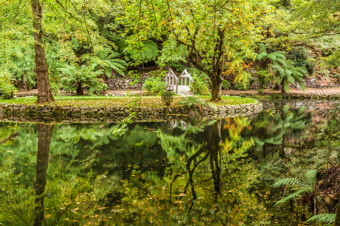 Beautiful lake with wooden footbridge and trees reflection in the water Australia Australian Landscape Pond Alfred Nicholas Gardens Architecture Beauty In Nature Built Structure Day Forest Green Color Growth Lake Landscape Nature No People Outdoors Reflection Scenics Tranquil Scene Tranquility Tree Water