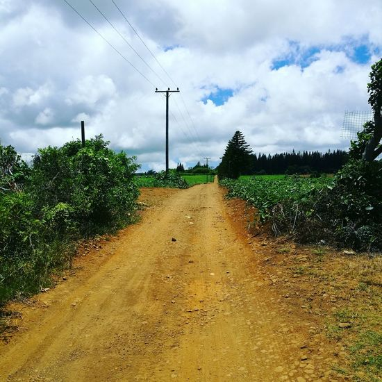 Road Trees Clouds And Sky Soil No People Roadtonowhere Goodfeeling EyeEmNewHere@ Mauritius