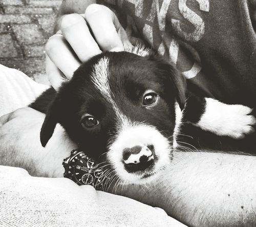 Little Baby Capa Filter Dog capa