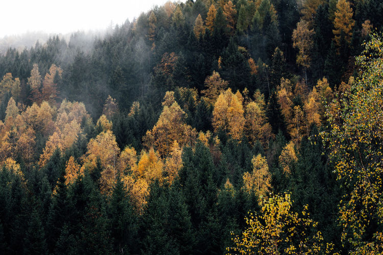 High angle view of autumn trees in forest