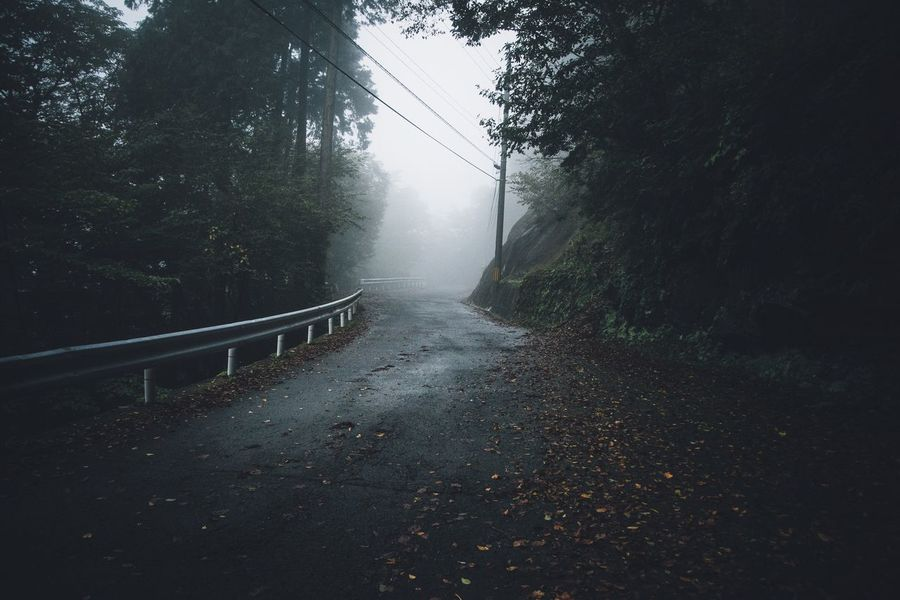 Nikon The Way Forward Tree Foggy Fog Beauty In Nature Japan Photography EyeEm Gallery Eye4photography  EyeEm Best Shots From My Point Of View Nikonphotography Road Nature