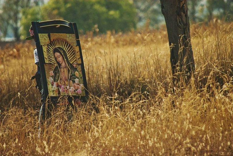 No People Nature Outdoors Tree Day Grass Pilgrimage Pilgrim Virgen De Guadalupe Mexico Walking Alone... Walking Carry On Religious Images Religion And Tradition Fields Of Gold Tree The Photojournalist - 2017 EyeEm Awards