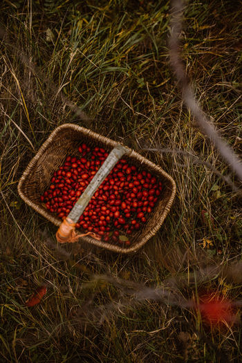High angle view of strawberries in basket