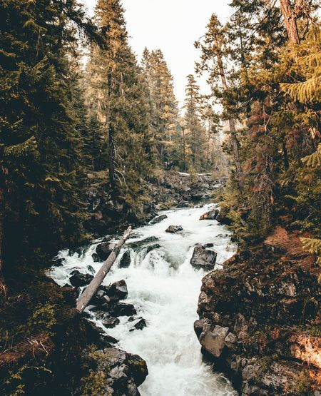 River in Oregon close to Crater Lake National Park Sunset Silhouettes Sunset_collection Landscape_photography Landscape EyeEm Landscape Landscape_Collection Eyeem Market Eye Em Nature Lover EyeEm Gallery EyeEm Best Shots River Tree Nature Forest No People Water Outdoors Scenics