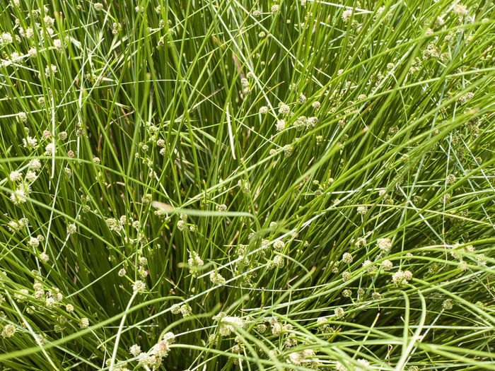 grass and