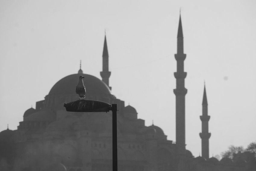 Istanbul ıstanbul Türkiye Turkey Istanbul City Mosquee Islam Architecture Islamic Architecture Traveller