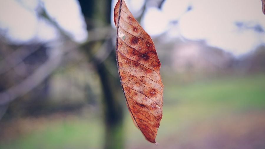 Close-up of dry leaf against blurred background