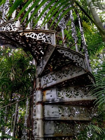 Spiral...... Tree Low Angle View No People Day Growth Leaf Nature Green Color Indoor Arch Spire Staircase Glasgow Botanic Gardens Glasshouses Ferns Palms Black Green Rusty Royal Bamboo Nuts And Bolts Fretwork Architecture Metal Treads