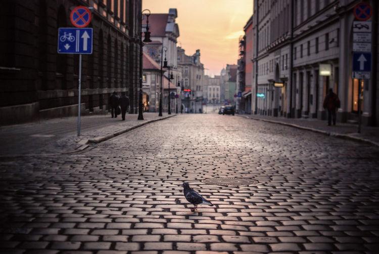 Close-Up Of Pigeon Perching On Cobblestone Street