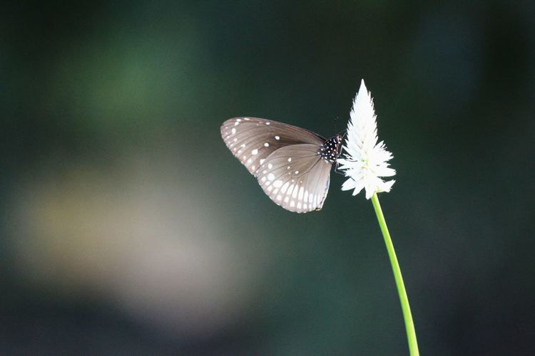 No People Beautiful Butterfly Nature🌳