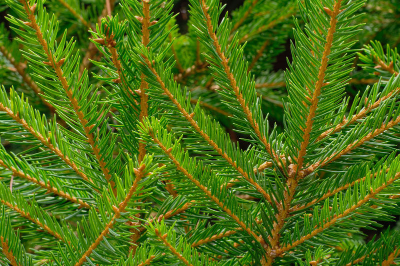 Close-up of tree