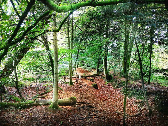 Haldon woods Leaves Trees Nature Forestwalk Woods Staffies Haldon Forest Devon