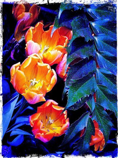 Flowers summer Outdoors garden Park tulips Orange Tulips nature Blue Shade light and dark Sunshine And Shade Stark Contrast