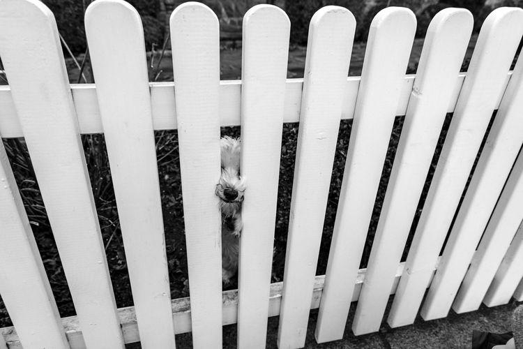 Cmon! Touch my headBlackandwhite Close-up Cute Dog No People Pattern Sneak Strange Weird