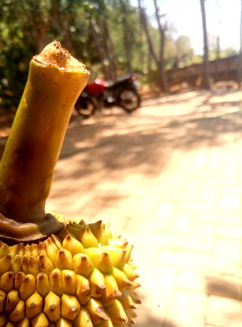 Jackfruit... Cellularphotography Meizuindonesia Meizuphoto Meizum3s Indonesiabanget Trawas Close-up Food And Drink