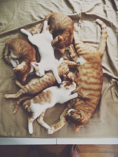 Curry Cat Family Cat Kitty 뽀, 빵이 건강히 행복하게 잘 살아야해 사랑한다 - 뽀/빵이 분양가는 날