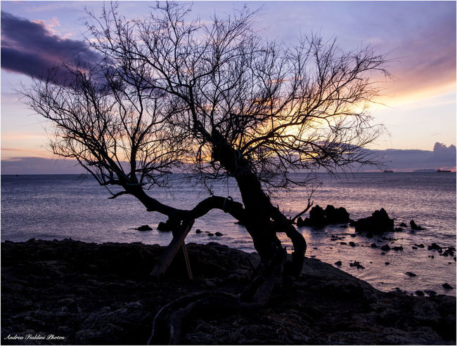 Beach Beauty In Nature Branch Close-up Day Horizon Over Water Nature No People Outdoors Reflection Scenics Sea Sky Sunset Tree Water Relaxing Italy Tuscany Livorno Italy
