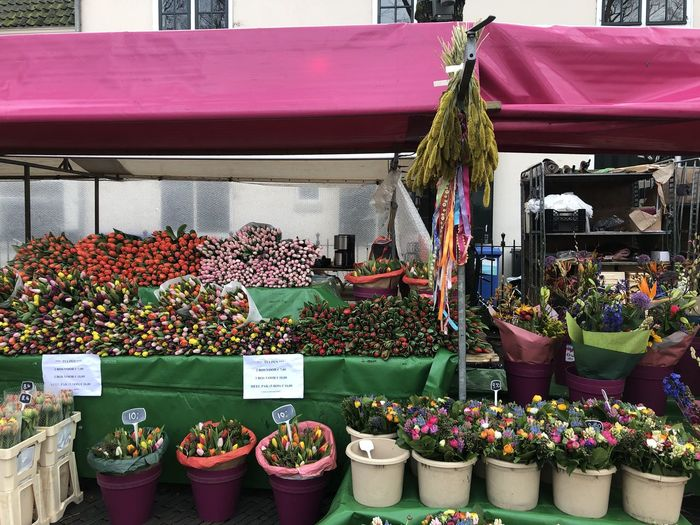 Potted plants for sale at market stall