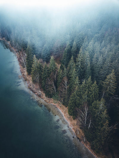 Aerial View Of Sea By Forest