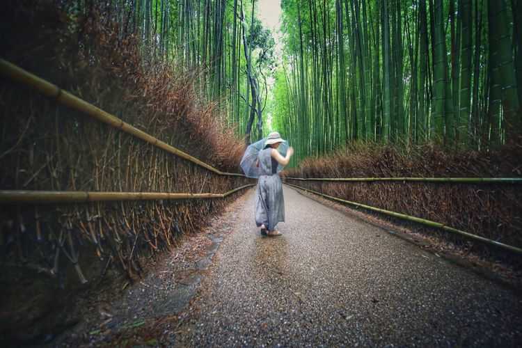 Woman with umbrella walking on footpath amidst trees in forest