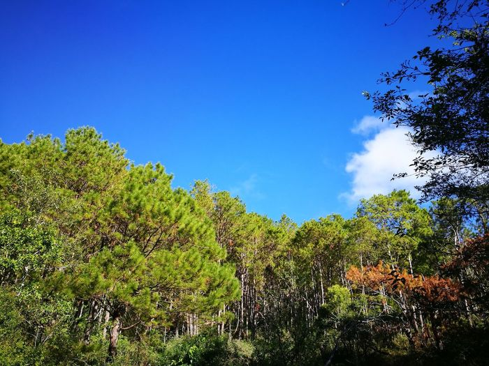 nature's spot 😍 Tree Forest Blue Clear Sky Sky Close-up Plant Green Color